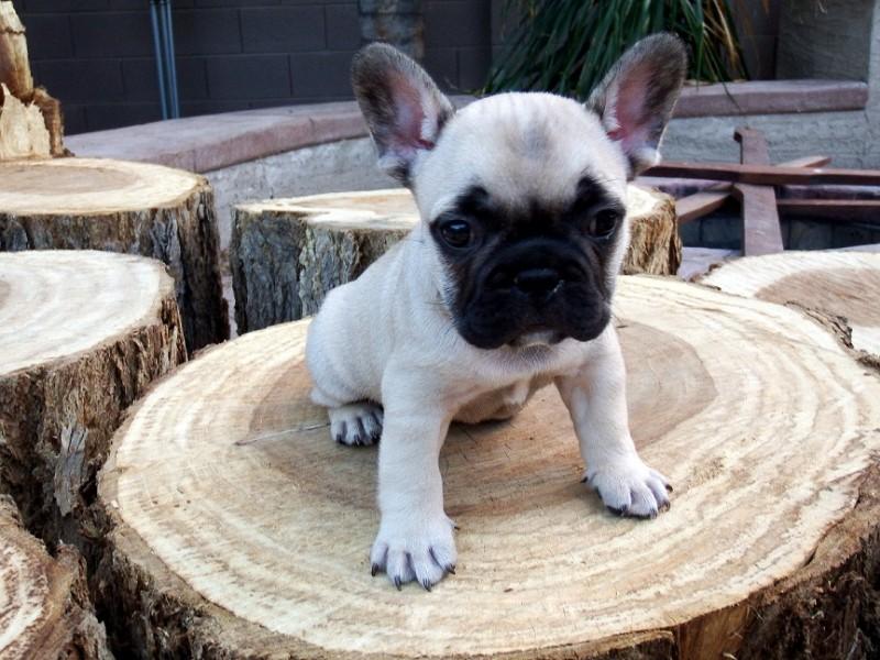 CutePuppy_onLogs_small