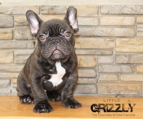 lil-griz-sitting