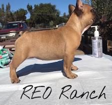 puppystackco