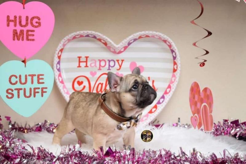walter-7-weeks-valentines-1024x683