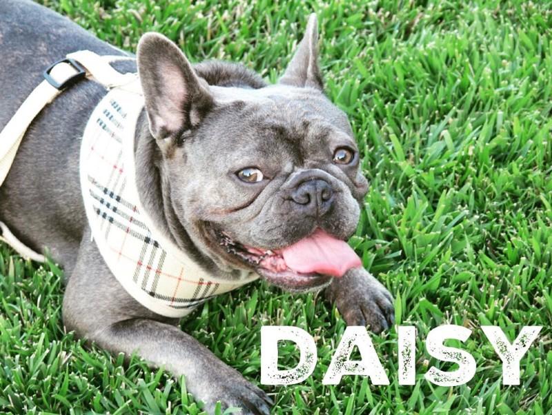 daisy-2_orig