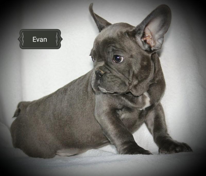 Evan1