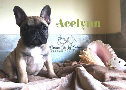 Acelynn_2__60160.1556494790